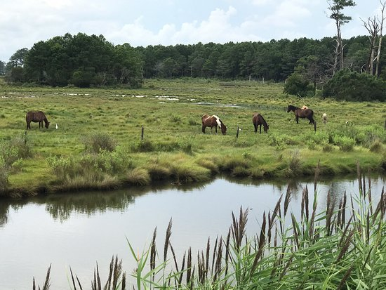 Assateague Island NS-VA Unit