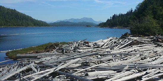 Port Edward, Canada: Driftwood scenic view