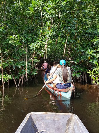 El Paredon, Guatemala: Les mangroves