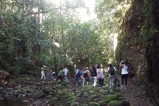 Tour della foresta pluviale di mezza