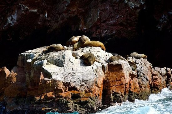 Ballestas Islands Sightseeing Boat...
