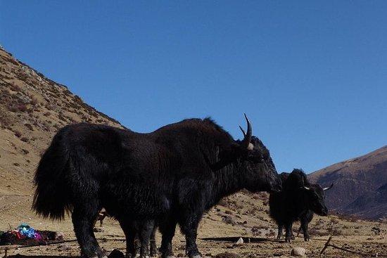 Hovedsakelig sentral tibet og bytur.
