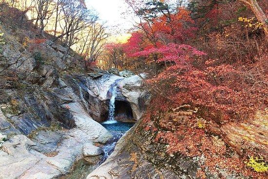 Mt. Seorak Fall Foliage + Birch Tree...