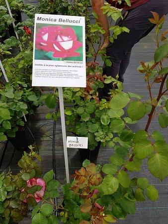 La Roseraie de Saint-Vincent un sur magnifique avec 800 variétés de rose a acheter !