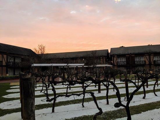 The Vines صورة فوتوغرافية