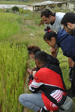 Aileu District, Timor Est: Agricultural tours where the guest has direct interactions with the community.
