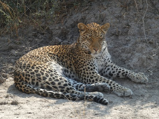 Leopard Sighting - Moremi Day Trip