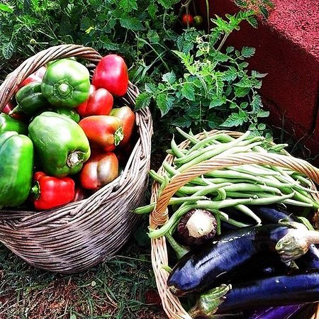 Laconia Region, Hellas: Summer veggie picking!! Are you ready for the cooking class??