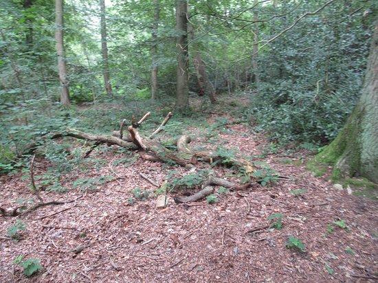 Queen Elizabeth Diamond Jubilee Wood