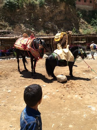 Setti-Fatma, โมร็อกโก: Horse in ourika, Day Trip, Morocco travel packages Setti- fatma Day trip excursion from Marrakech Morocco travel packages