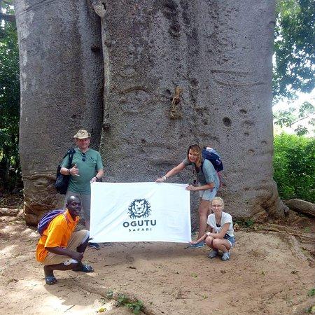 Funzi Island, Kenya: Funzi baobab