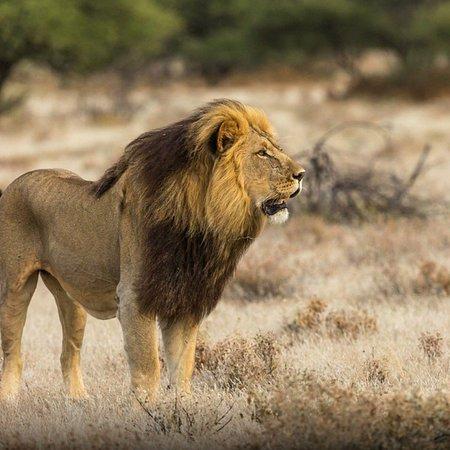 Mendez Africa