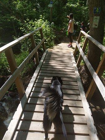 McGillivray Falls Self-guiding Trail: falls bridge