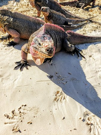 Aquaquest Escapes: Iguana Island