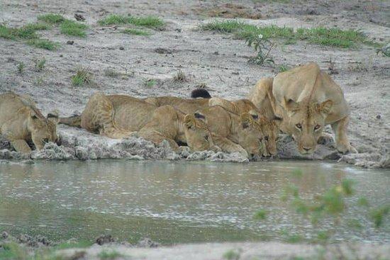 Digitata Tours & Safaris