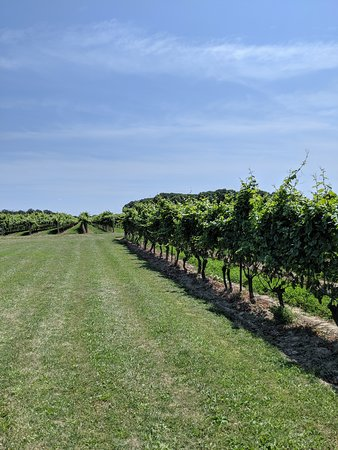 The Great Canadian Wine& Cheese Guided Tour of Niagara on the Lake.: Hinterbrook
