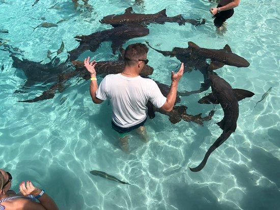 Compass Cay: Sharks. sharks. sharks.