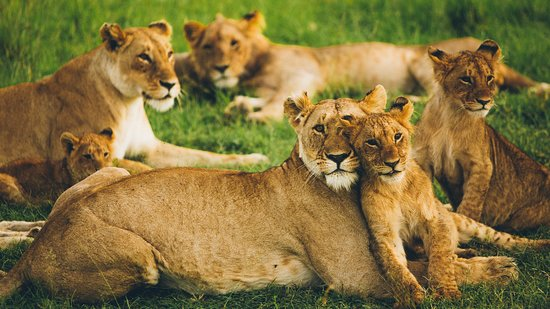 King Lion Tours And Safaris