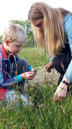 Balkbrug, Paesi Bassi: educatie / foodwalk / eten uit de natuur