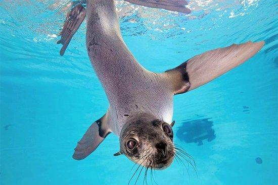 New England Aquarium Skip-The-Line...