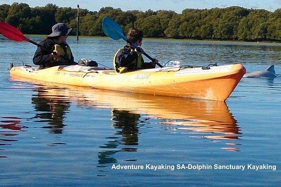 Paseo en kayak por el santuario de...