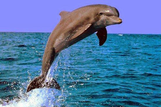 Osservazione dei delfini a Lovina e