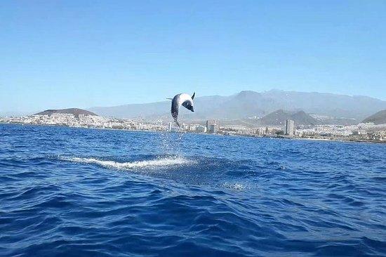 Kayak avec des dauphins et des...