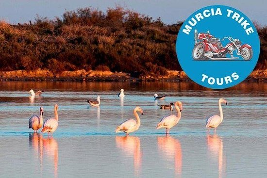 The Majestic Flamingo Tour - (2 uur ...