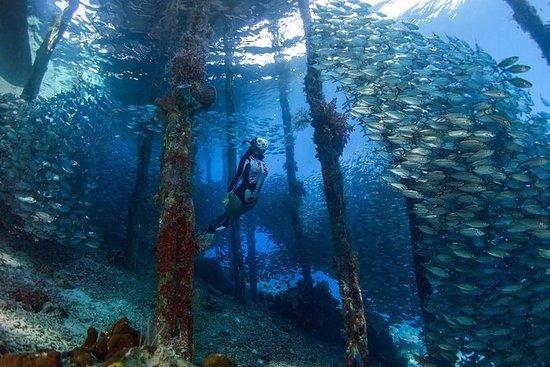 Scuba Diving Experience in Raja Ampat Island