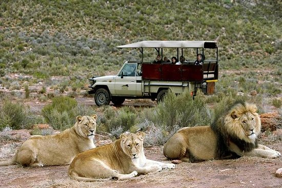 (Cape Town) BEST AV AQUILA SAFARI...
