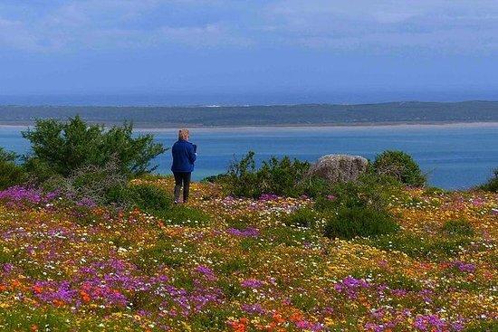 Fiori di primavera della costa