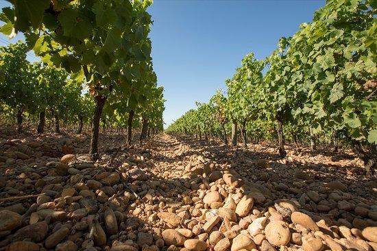 Franquevaux, France: Découverte du vignoble