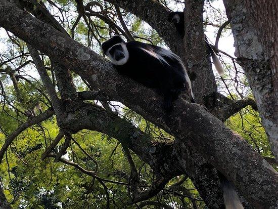 Geweldige plek tussen apen.