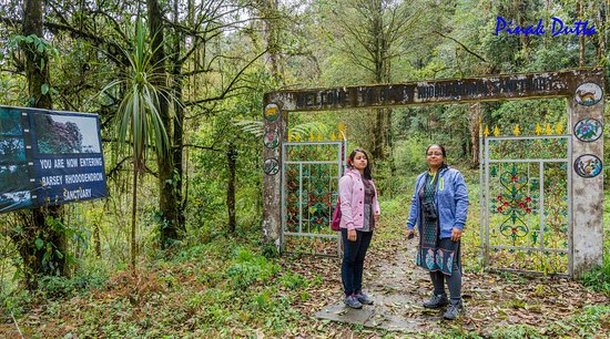 Entry to Barsey Rhododendron Sanctuary from The Chayataal, Hee petal gate