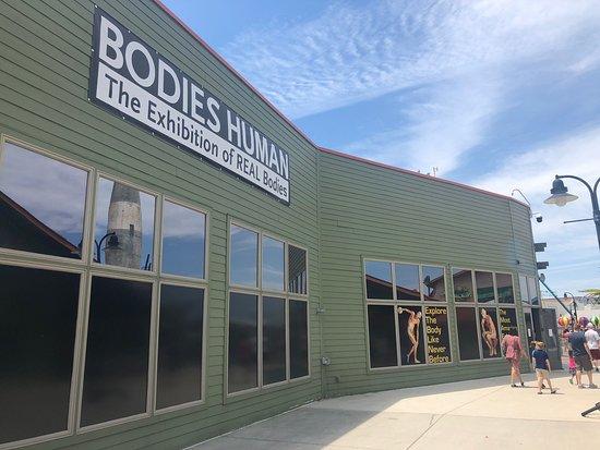 Bodies Human