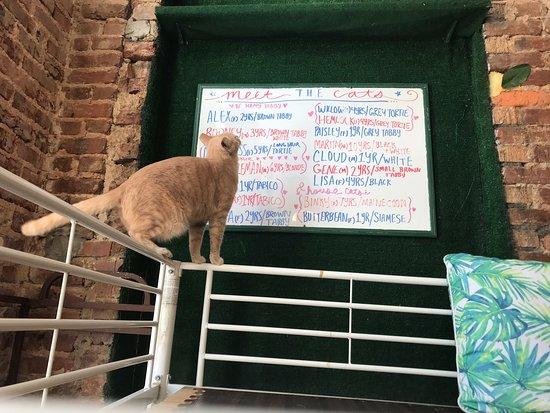 Happy Tabby Cat Cafe