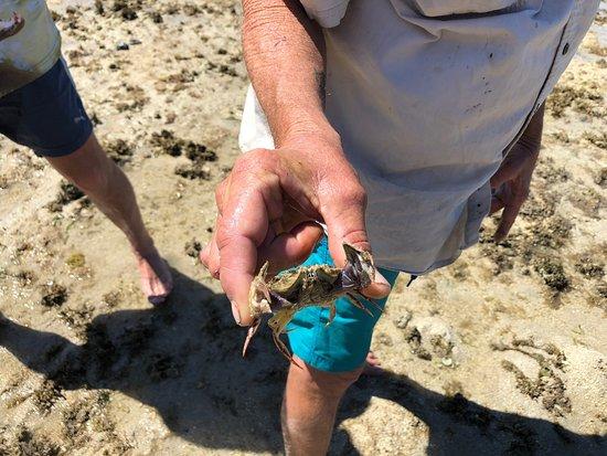Bloomfield, أستراليا: Escape 2 Island & Reef Charters