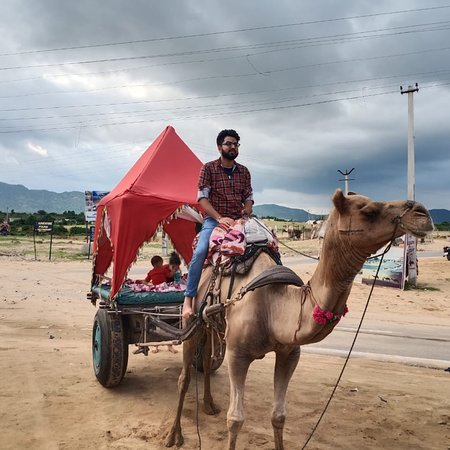 ‪Pushkar Camel Safari‬