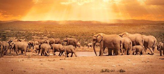 Uganda: Africa Adventure with @Tripcareadventures  Please get in touch with info@tripcareadventures.com