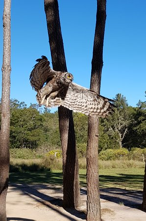 Plettenberg Bay Game Reserve, Νότια Αφρική: Owl interaction before landing safely on my hand