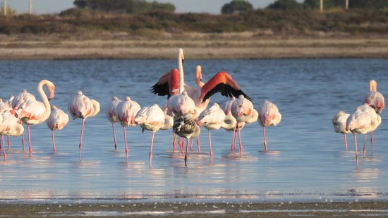 Birding Languedoc