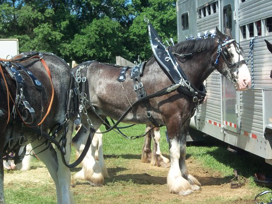 West Friendship, MD: Draft Horse.  Photo by Frederick Meekins
