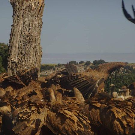 Observatorio ornitológico de Caleruega