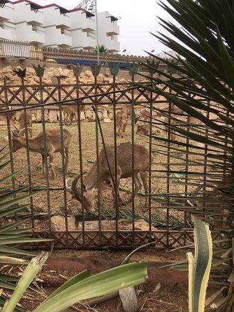 Toundoute, المغرب: Beestjes lopen de hele tijd op en neer van de stress
