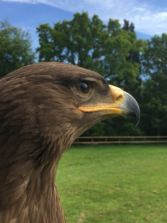 Surrey Hills Falconry