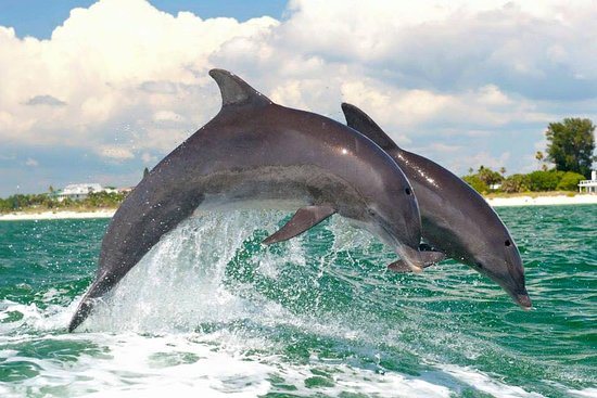 delfin dating