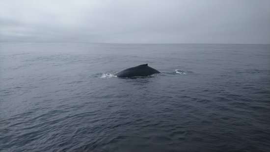 Port Renfrew Whale & Wildlife Watching: One of the many humpback whales we saw out in the Juan De Fuca Strait.