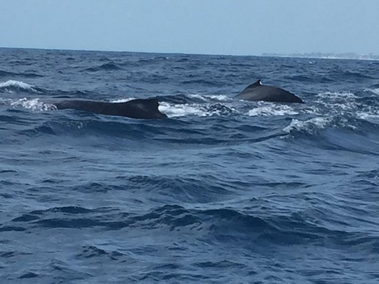 Bazaruto Archipelago, Mozambique: Whale watching Bazaruto 12 Aug 2019