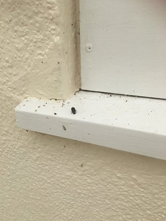 Dead Bugs On Window Sill Of Wash Area The Grove Picture Of