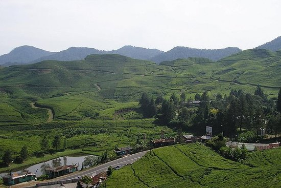 Agrotourism Gunung Mas Tea Plantation,Puncak West Java